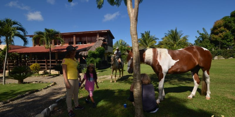 pinto horse with kids